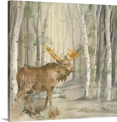 Birch Forest III