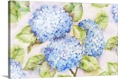 Blue Hydrangeas Horizontal