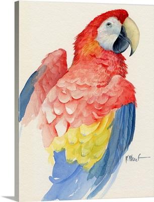 Bright Macaw