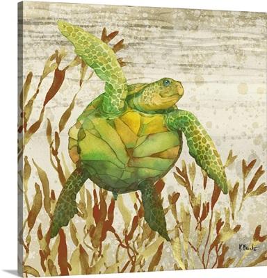 Calypso Turtles I