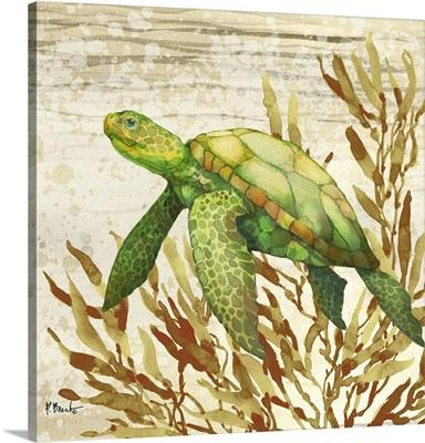 Calypso Turtles II