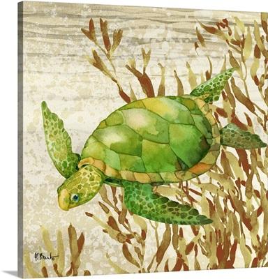 Calypso Turtles IV