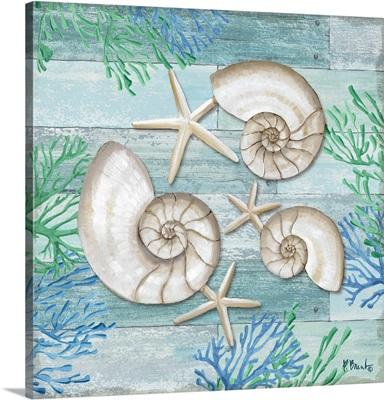 Clearwater Shells II