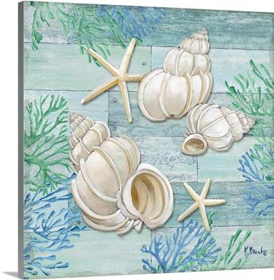 Clearwater Shells III