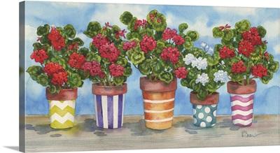 Fancy Pots Geraniums