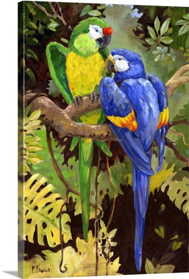 Green and Blue Tropical Macaw