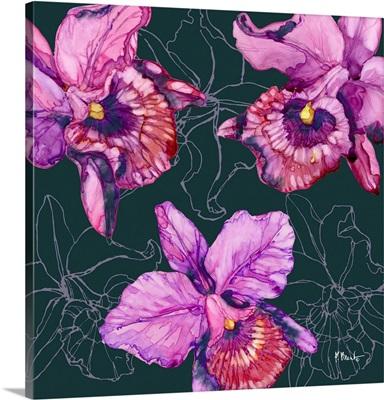 Hilo Orchids