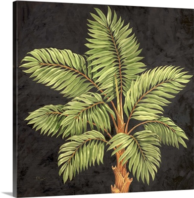 Parlor Palm I