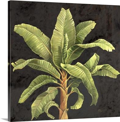 Parlor Palm II