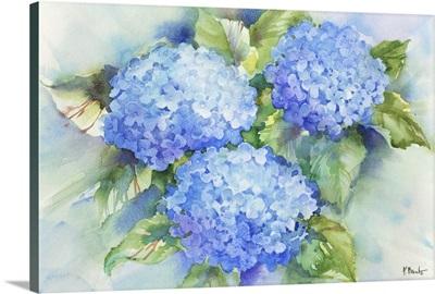 Sky Blue Hydrangea