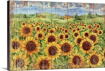 Sunflower Field Distressed