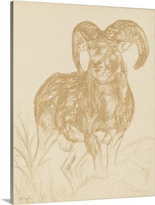 Big Horn Sketch