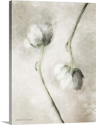 Blush Ranunculus Duo
