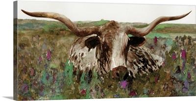 Texas Longhorn In Field