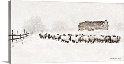 Warm Winter Barn with Sheep Herd