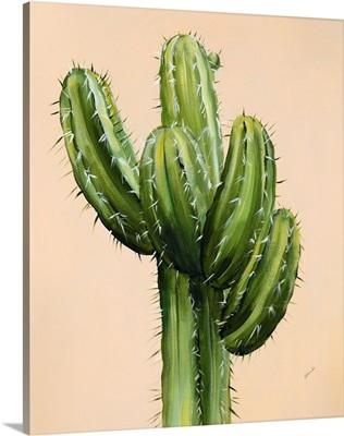 Colorful Cactus II