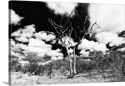 African Landscape VIII