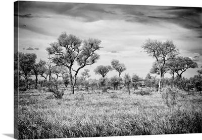 African Natural Landscape