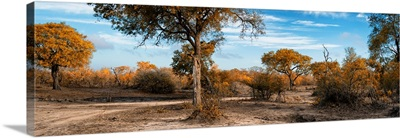 African Savannah Landscape II