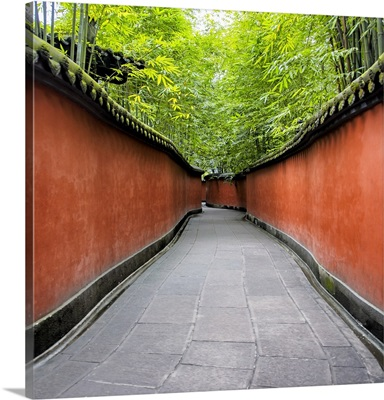 Alley Bamboo