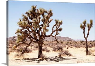 American West - Colorado Desert