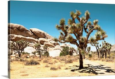 American West - Joshua Tree National Park