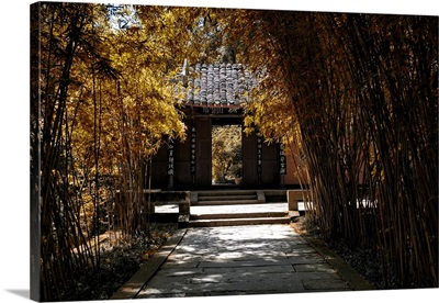 Bamboo Forest in Autumn