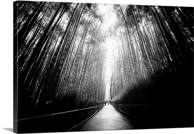 Black And White Japan Collection - Arashiyama Bamboo Forest
