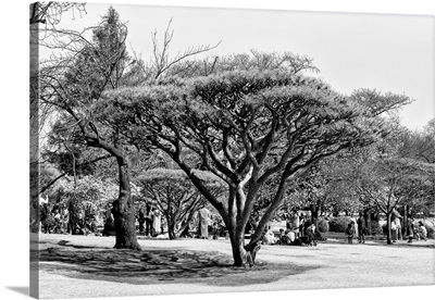 Black And White Japan Collection - Japanese Tree