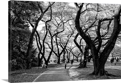 Black And White Japan Collection - Majestic Trees
