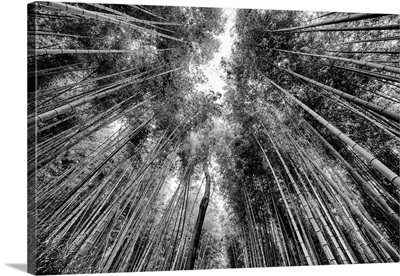 Black And White Japan Collection - Sagano Bamboo Forest