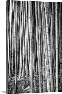 Black And White Japan Collection - Thousand And One Bamboos