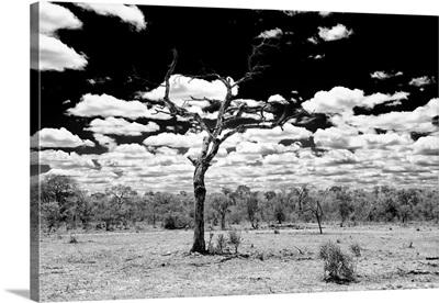 Dead Tree in the African Savannah II