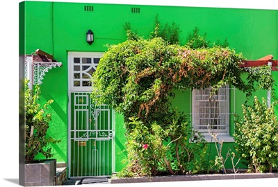Green House - Cape Town