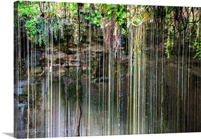Hanging Roots of Ik-Kil Cenote IV