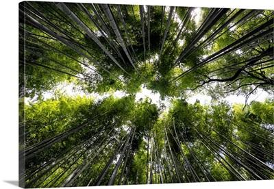 Japan Rising Sun Collection - Arashiyama Bamboo Forest