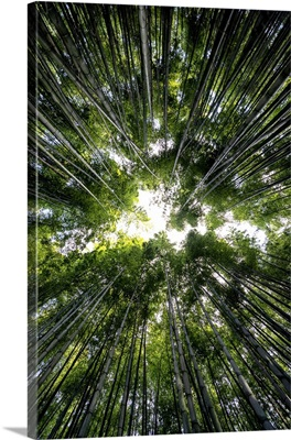 Japan Rising Sun Collection - Bamboo Forest