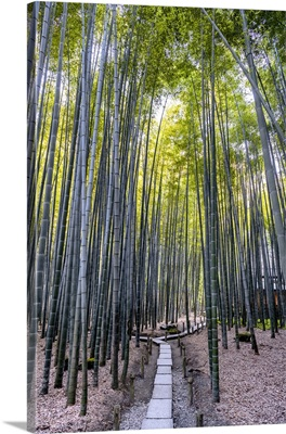 Japan Rising Sun Collection - Bamboo Forest Path