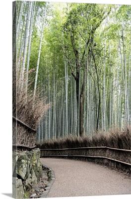 Japan Rising Sun Collection - Bamboo Path