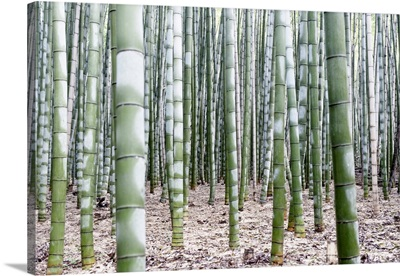 Japan Rising Sun Collection - Beautiful Bamboo Forest III
