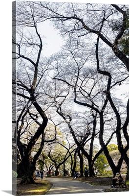 Japan Rising Sun Collection - Beautiful Japanese Maples II