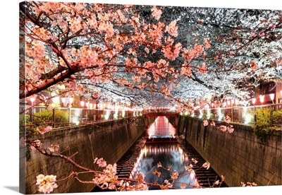 Japan Rising Sun Collection - Cherry Blossom at Meguro River