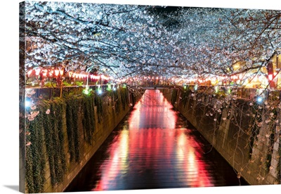 Japan Rising Sun Collection - Cherry Blossom at Meguro River II