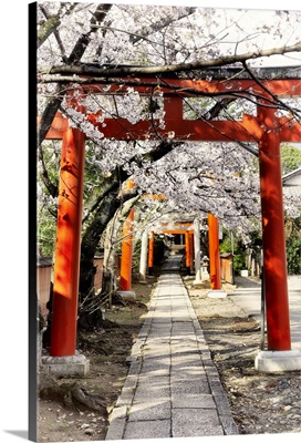 Japan Rising Sun Collection - Cherry Blossoms and Torii