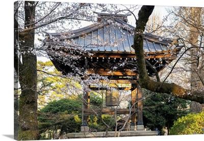 Japan Rising Sun Collection - Gotokuji Temple