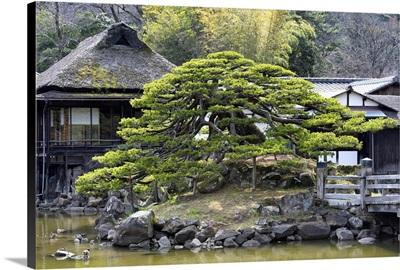 Japan Rising Sun Collection - Japanese Garden