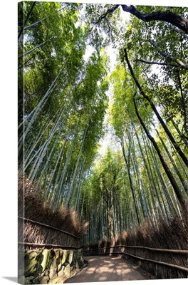 Japan Rising Sun Collection - Kyotos Bamboo Forest