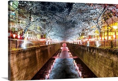 Japan Rising Sun Collection - Meguro River Cherry Blossom