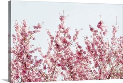 Japan Rising Sun Collection - Pink Sakura Tree