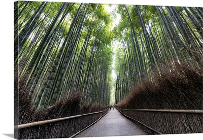 Japan Rising Sun Collection - The Bamboo Forest